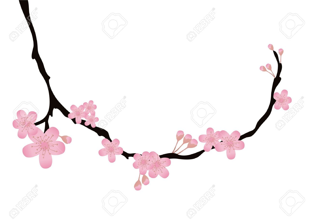 vector illustration of cherry tree branch with flowers in bloom rh 123rf com