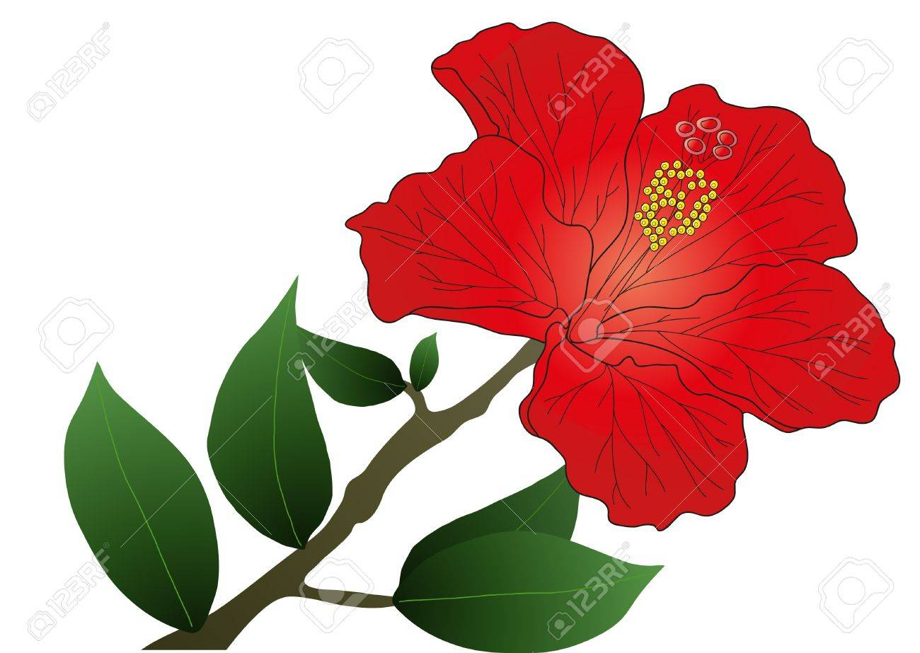 Hibiscus flower clipart image hibiscus flower - Vector Illustration Of Red Hibiscus Flower With Leaves Stock Vector 9429171