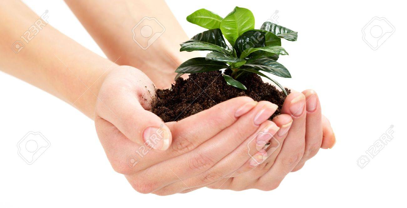 Close-up of fresh branch with leaves in soil held by a human Stock Photo - 9727100