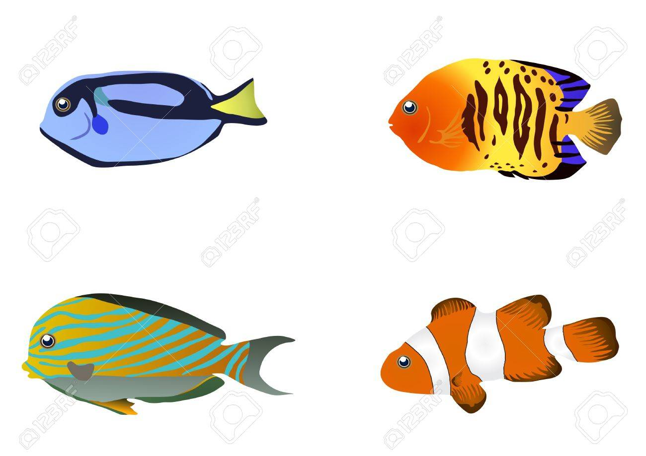 illustration of four tropical fishes Stock Vector - 9727863