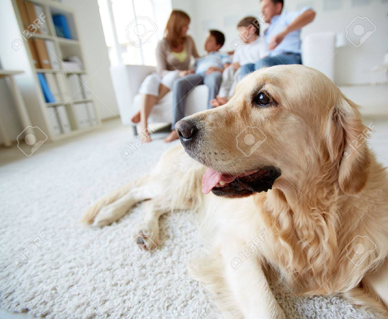 Portrait of cute pet lying on the floor with family of four resting at home Stock Photo - 22247699