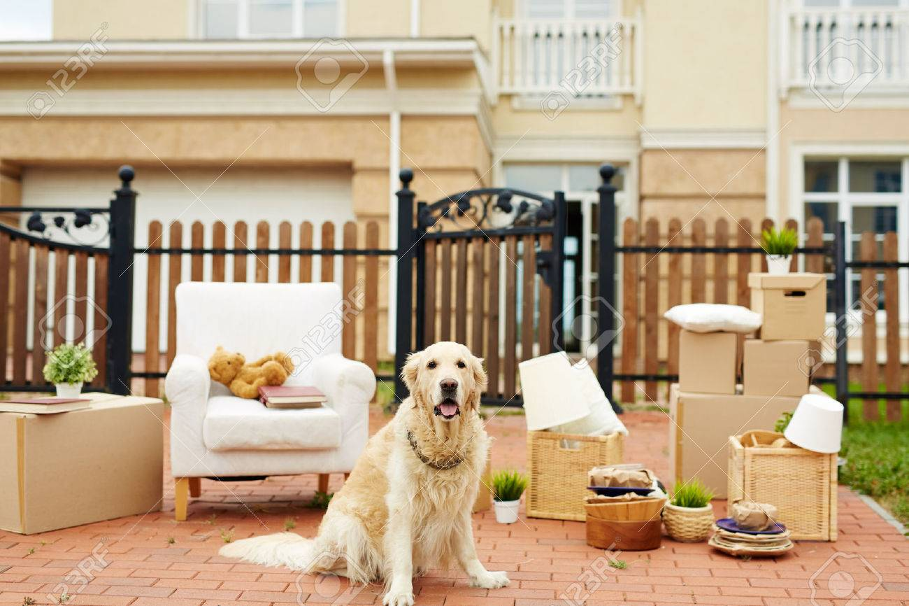 Cute labrador sitting on background of packed things by fence of new house Standard-Bild - 65644097