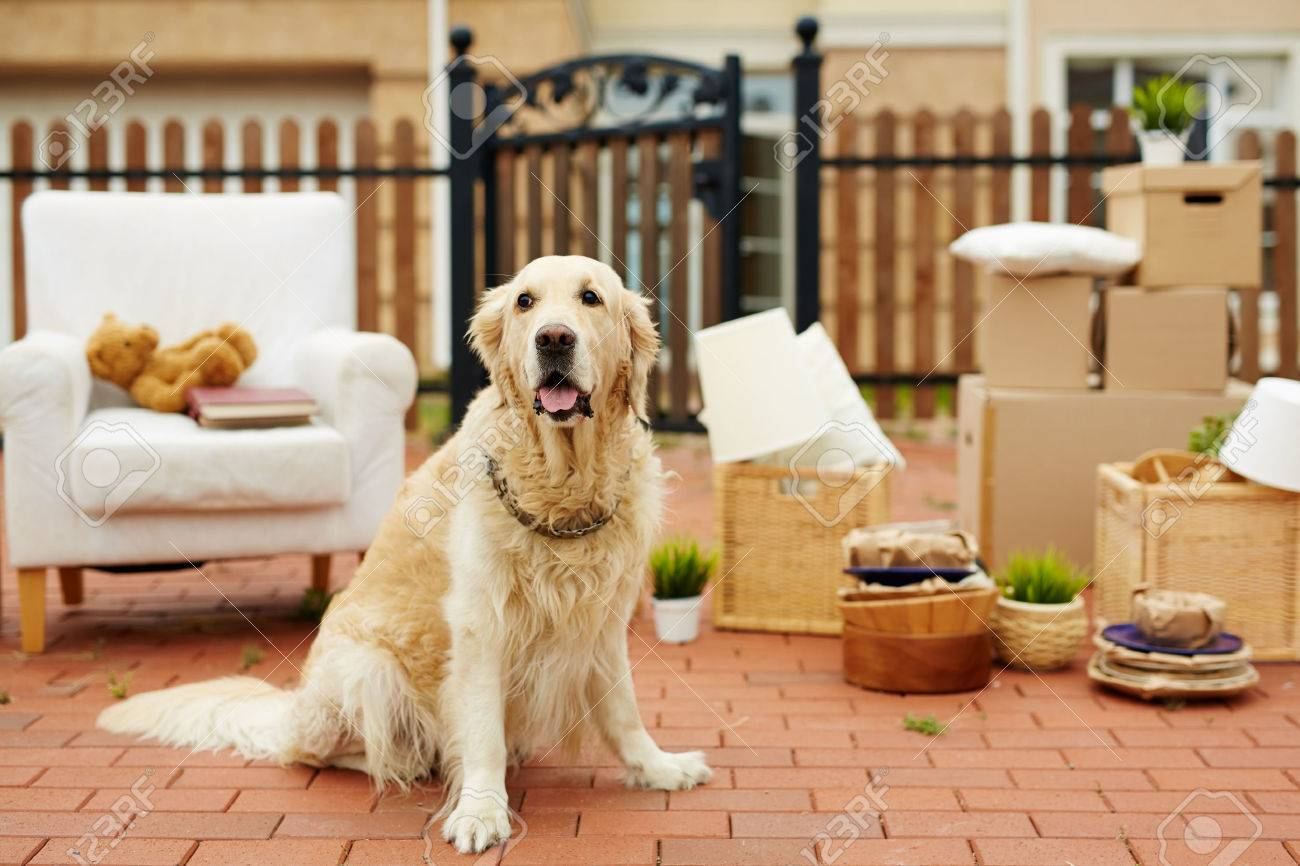 Cute pet sitting by new house with packed things on background Standard-Bild - 63810584