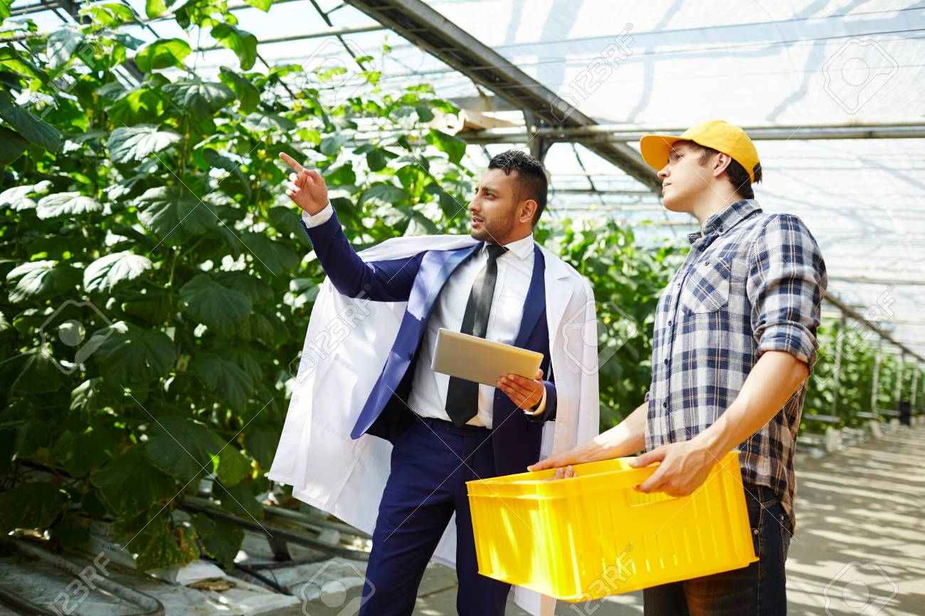 Handsome Inspector at Spacious Greenhouse Stock Photo - 85534562 e9951b34fa95