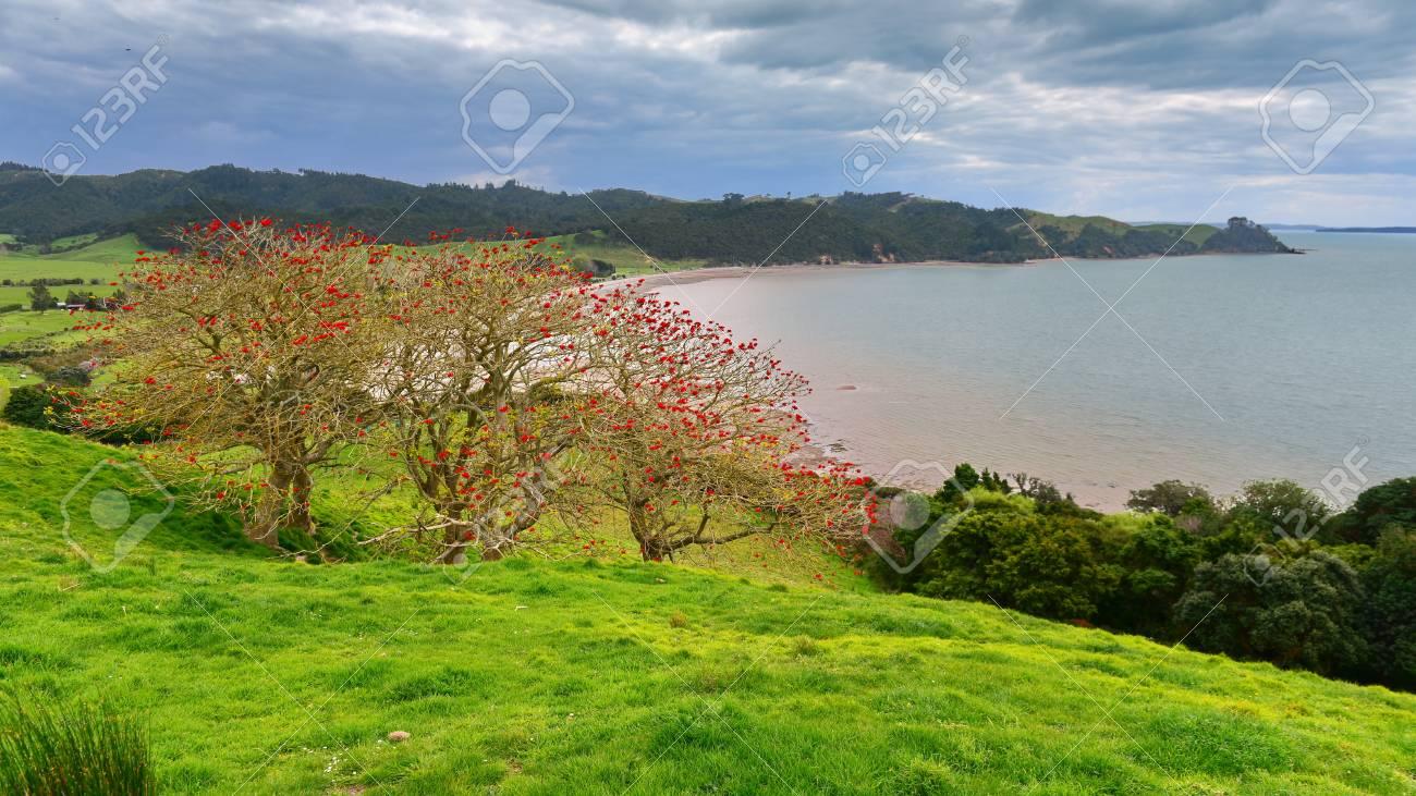 Duder Regional Park, a coastal farm park next to Hauraki gulf in New Zealand - 124621386