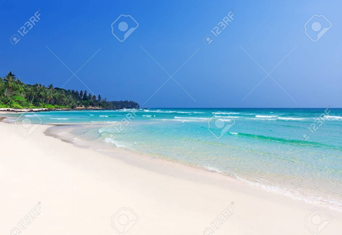 Palm trees in tropical perfect beach at Koh Kood , Thailand - 44203467