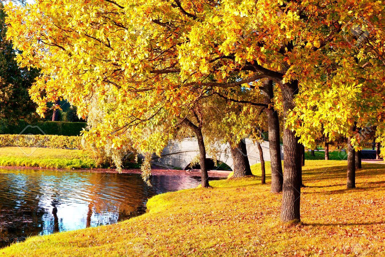 Beautiful autumn forest in park \' Pushkin, Saint Petersburg, Russia - 47182903