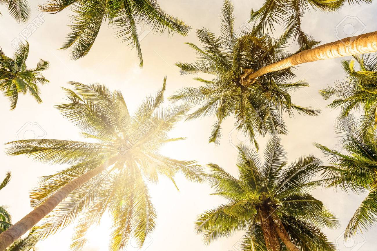 Coconut palm trees perspective view - 51699085