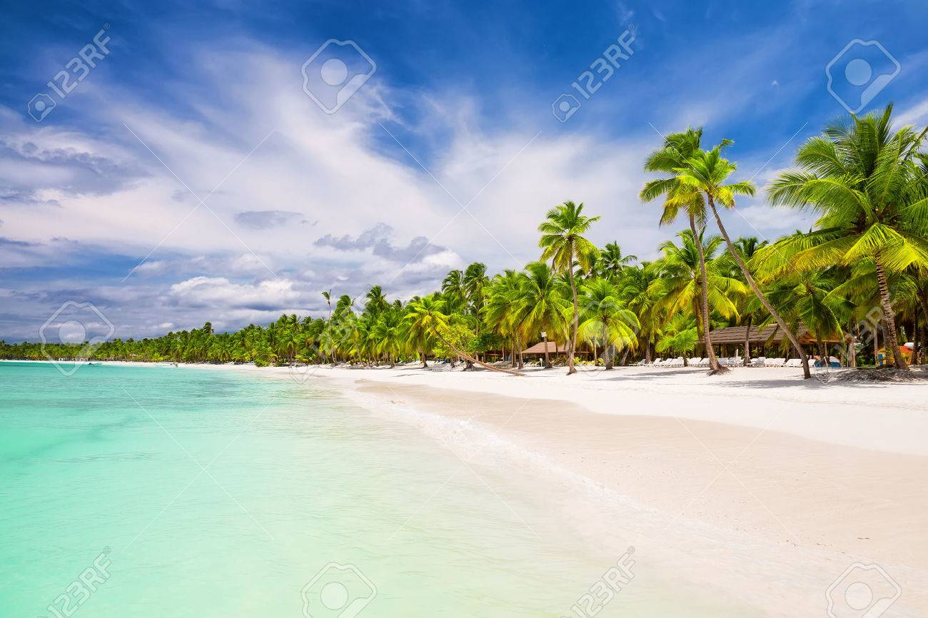 Coconut Palm trees on white sandy beach in Punta Cana, Dominican Republic - 67163816