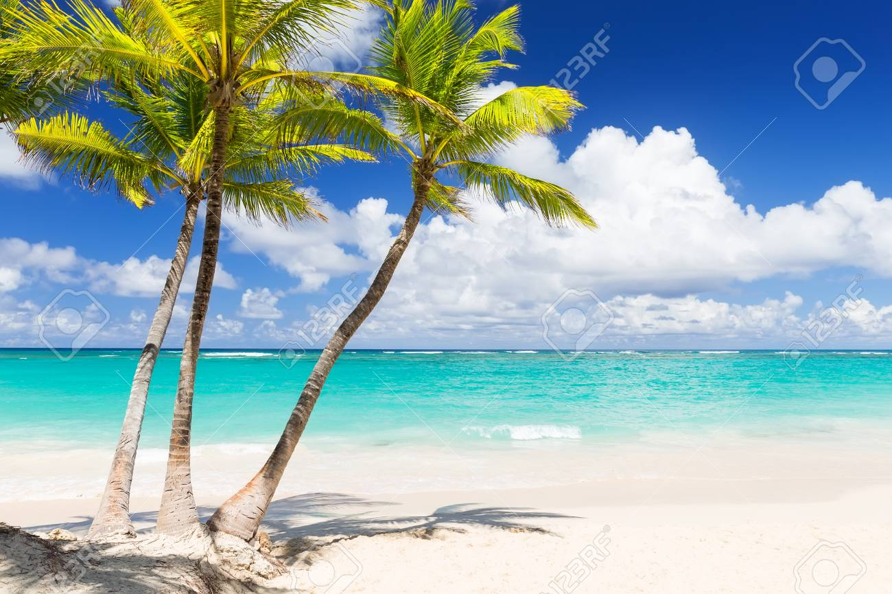 Coconut Palm trees on white sandy beach in Punta Cana, Dominican Republic - 120258661