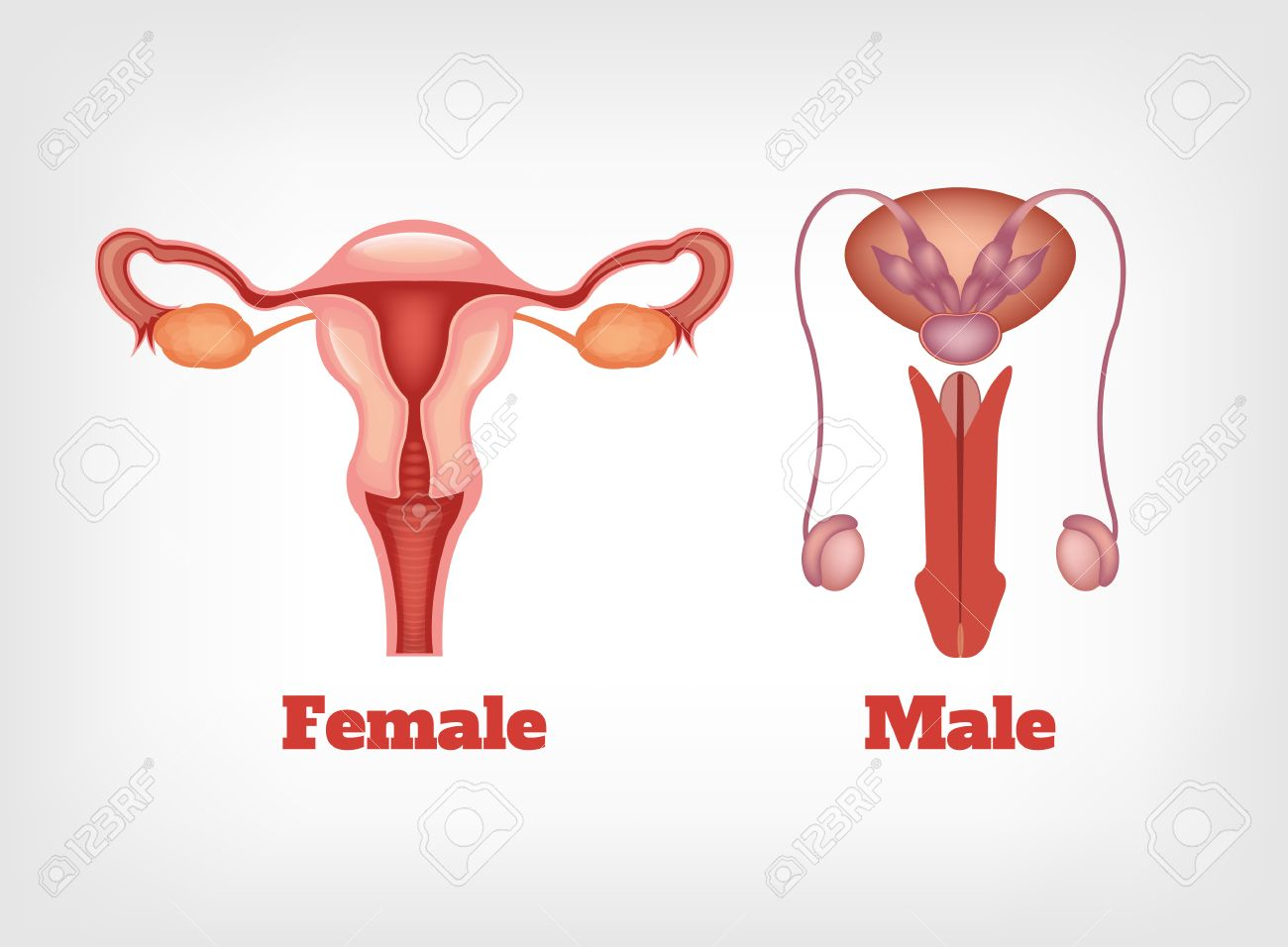 Reproduction in humans with pictures Free Image Hosting - Upload and Search Images