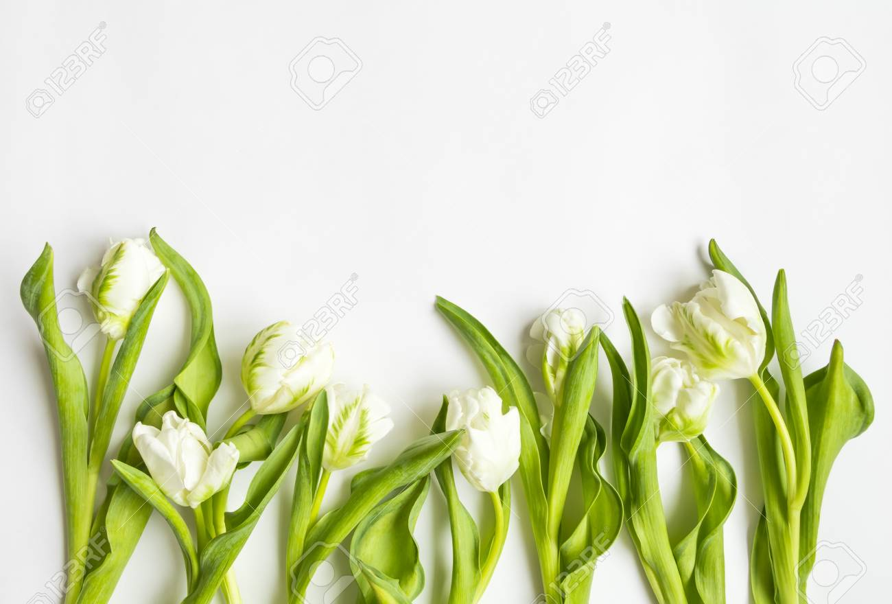 bunch of white tulips fresh bouquet on white background border for wedding card or