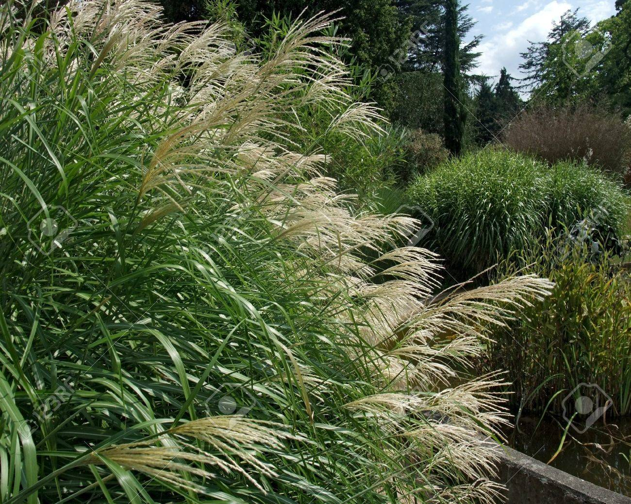 Outdoor Shot Of Various Decorative Grass Plants In Sunny Ambiance