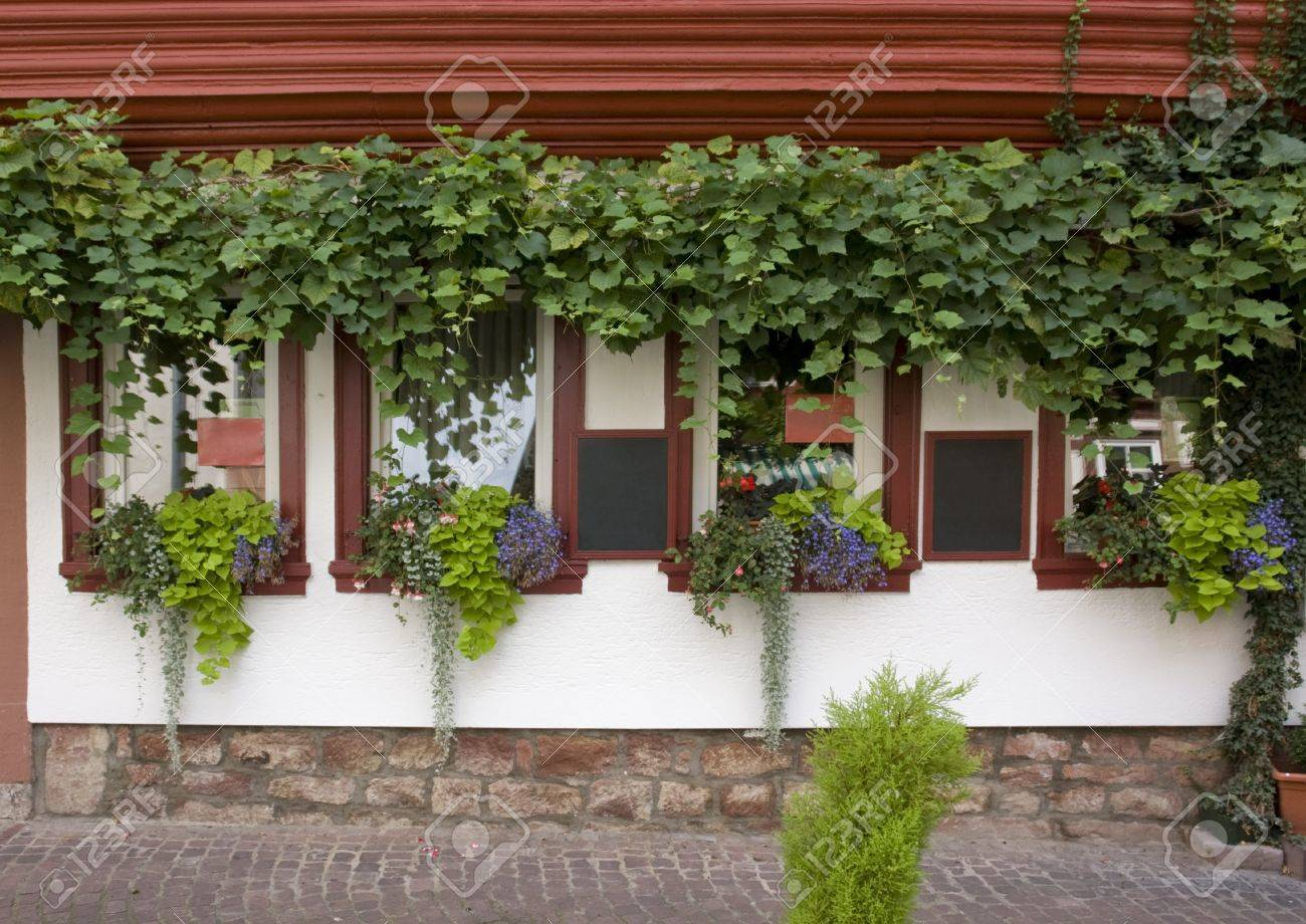 frontal architectural detail showing a overgrown house facade in Miltenberg, a small town in Southern Germany Stock Photo - 11951986