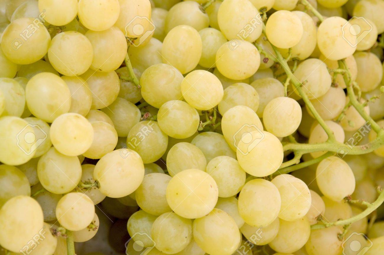 Full frame background with lots of yellow grapes stock photo full frame background with lots of yellow grapes stock photo 10987349 jeuxipadfo Choice Image