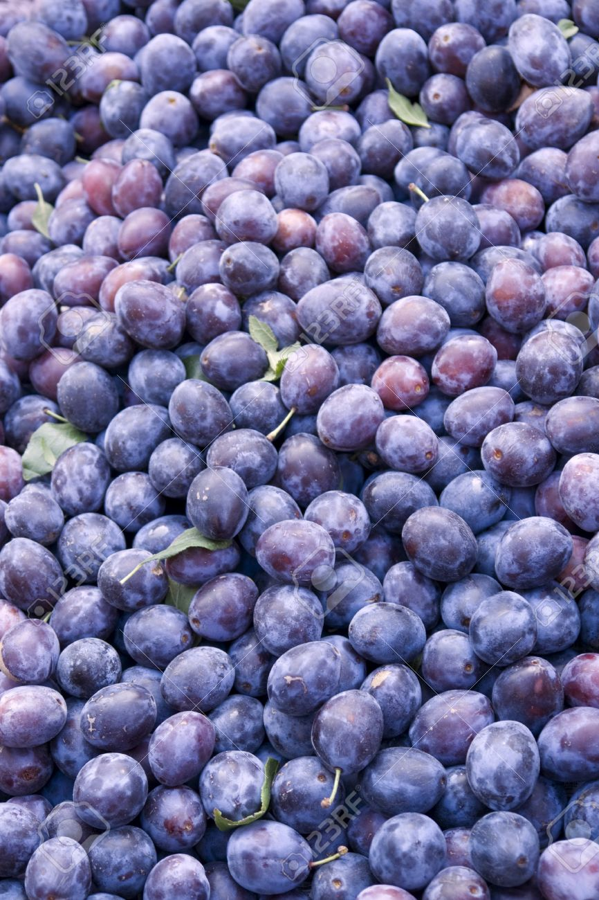 Full frame background with lots of plums stock photo picture and full frame background with lots of plums stock photo 11014605 jeuxipadfo Choice Image