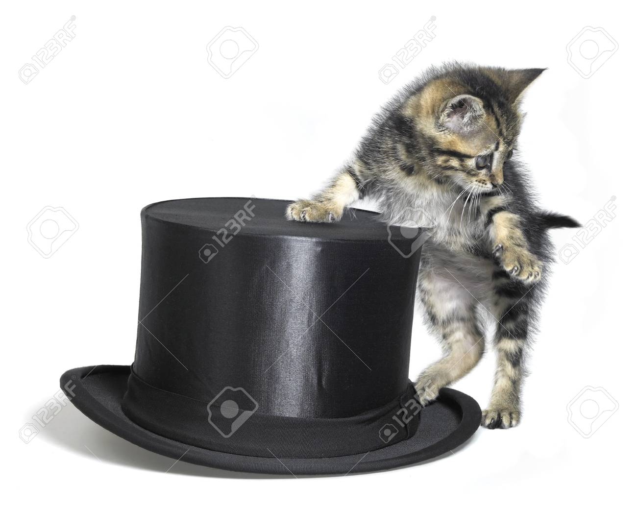 Studio photography of a kitten standing upright beside a black top hat, isolated on white Stock Photo - 11015190