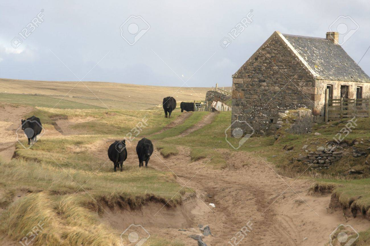 rural scenery with farm animals Stock Photo - 11095073
