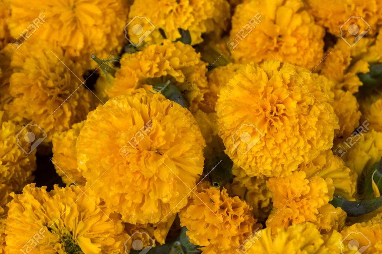 The Thais Make A Garland With Marigold Flowers Stock Photo