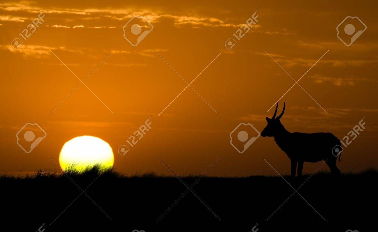 Wildlife Stock Photography African wildlife silhouette