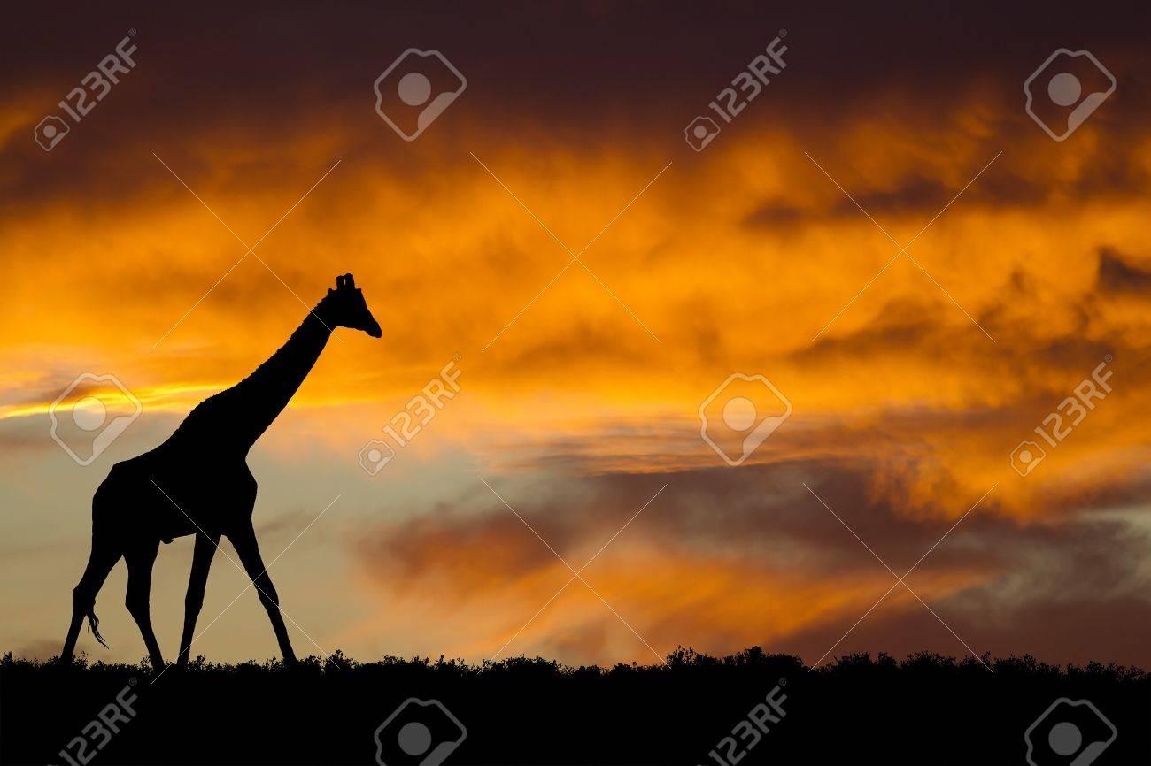 Idyllic african wildlife silhouette - 7974343