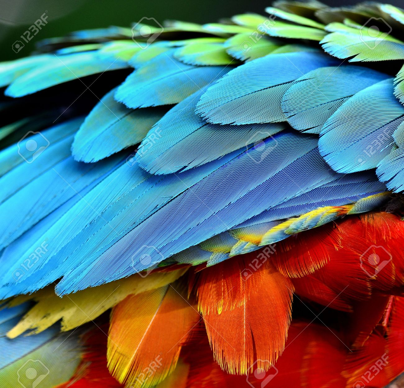Bird feathers pictures