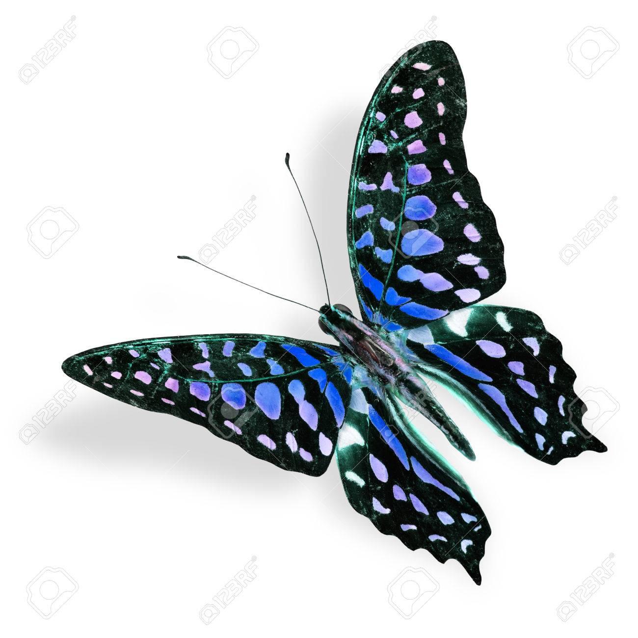Atemberaubend Schmetterling Lebenszyklus Färbung Seite ...