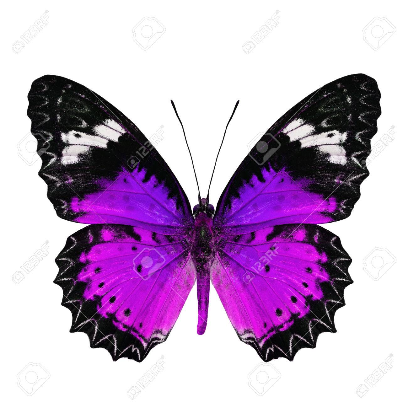 Beautiful Purple Butterfly In Fancy Color Profile Isolated On Stock Photo Picture And Royalty Free Image Image 30347073