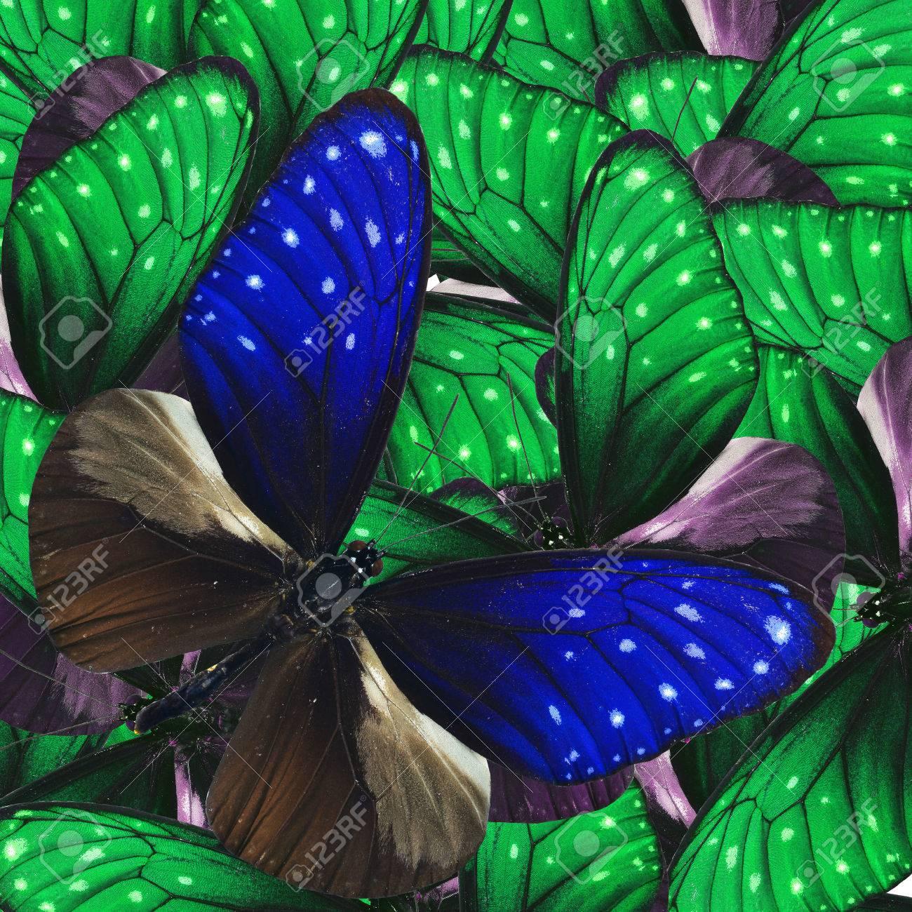 Rayas Azul Crow Mariposa Con Bonitas Mariposas De Fantasía Verde En