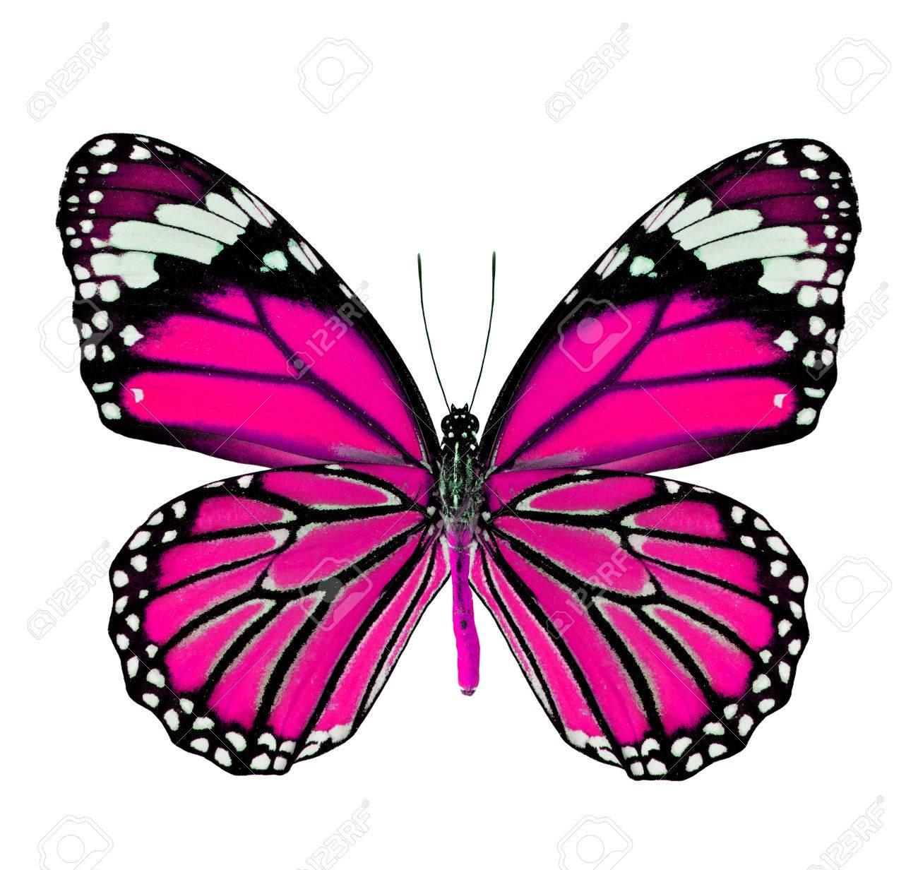 Beau Papillon Rose De Couleur Fantaisie Isolé Sur Fond Blanc
