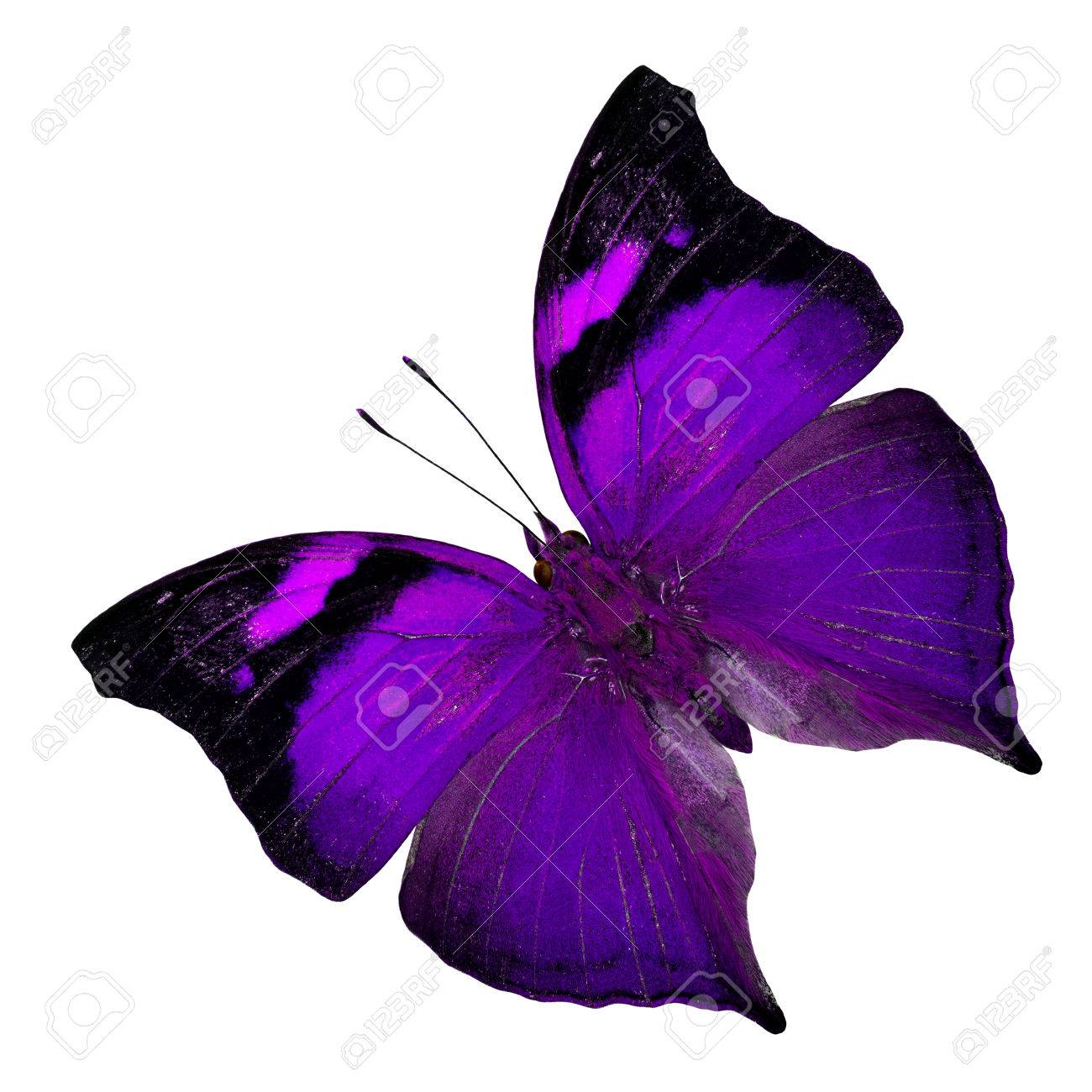Beautiful Purple Butterfly In Fancy Color Profile Isolated On Stock Photo Picture And Royalty Free Image Image 35300928