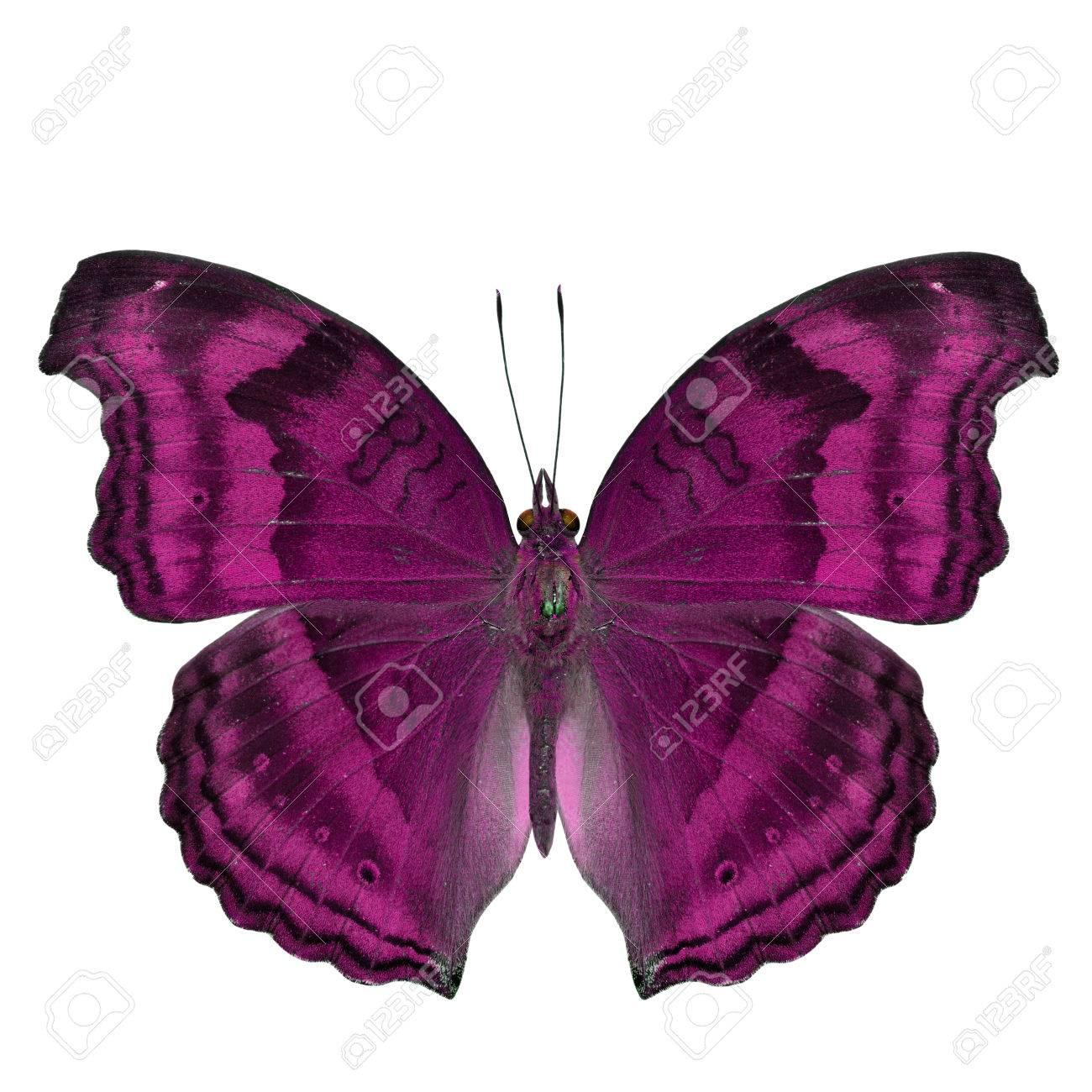 Niedlich Schmetterling Zum Färben Bilder - Beispielzusammenfassung ...