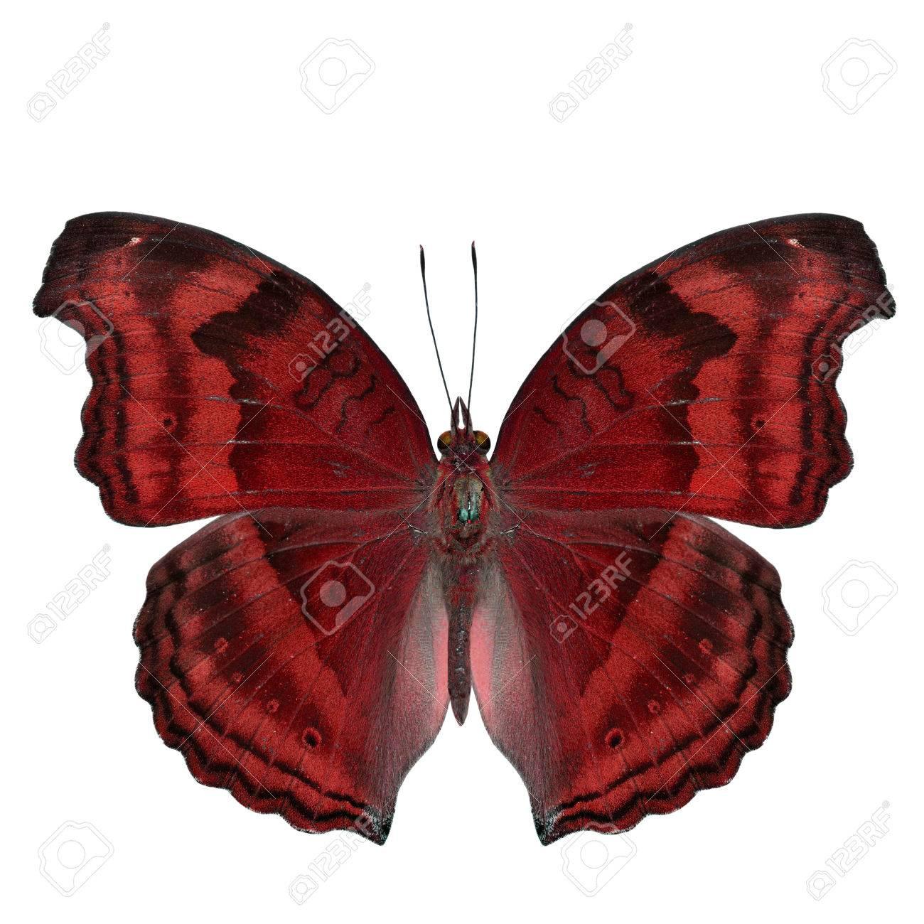Tolle Süße Schmetterling Malvorlagen Fotos - Malvorlagen Von Tieren ...