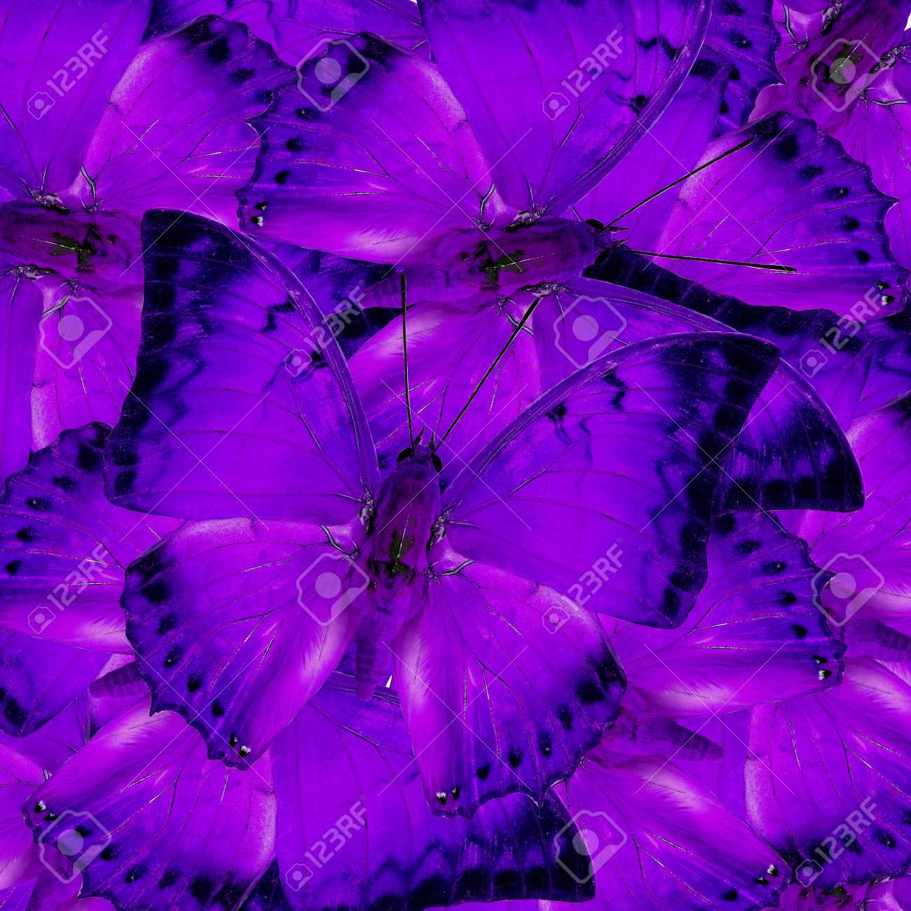 Mariposas Púrpuras En Pleno Encuadre Mezclado Como El Gran Textura ...