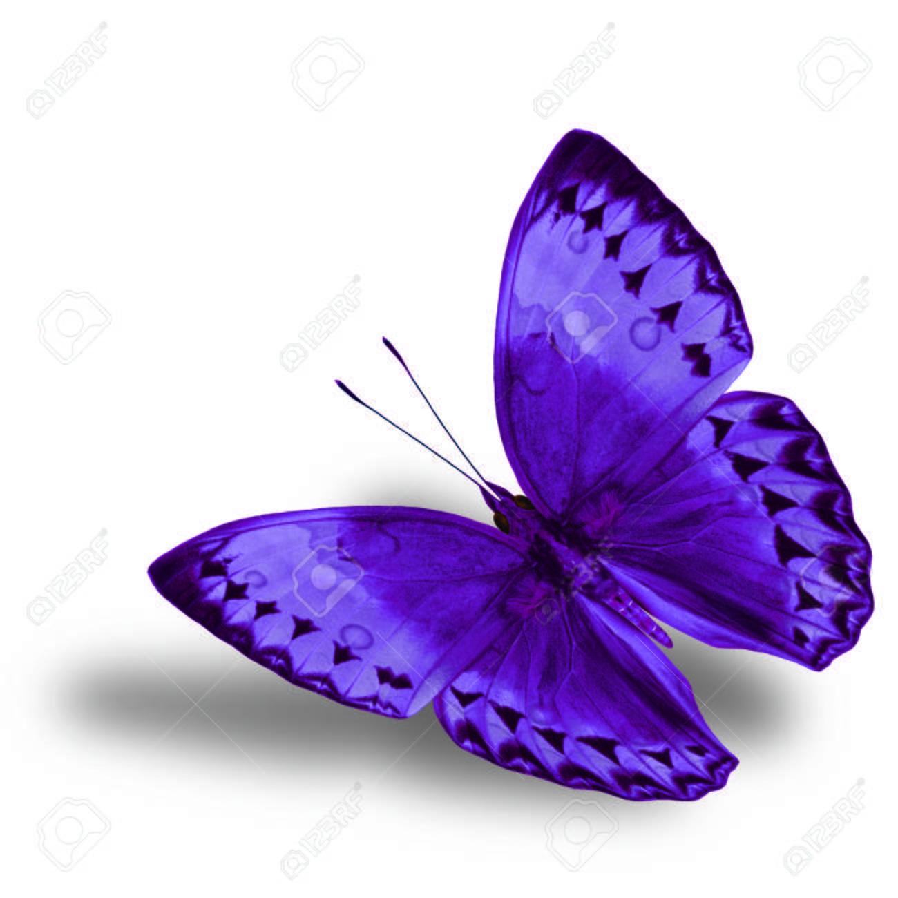 Wunderbar Schmetterlingsbild Zu Färben Zeitgenössisch - Entry Level ...