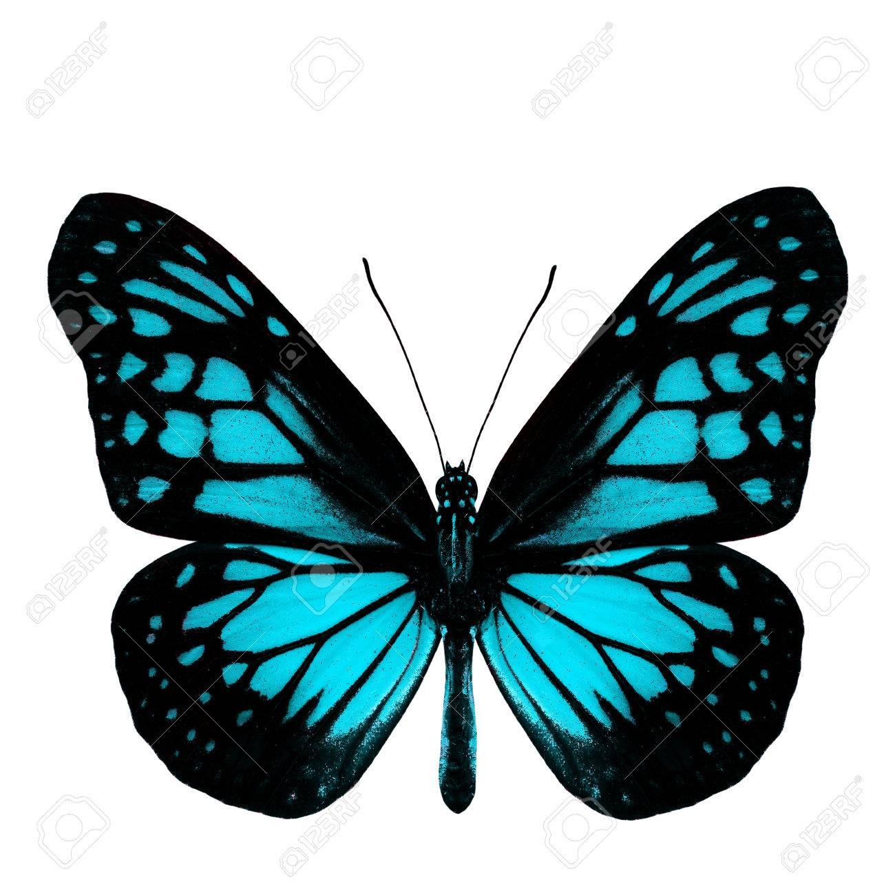 Immagini Stock La Più Bella Farfalla Blu Luce Nel Profilo Colore