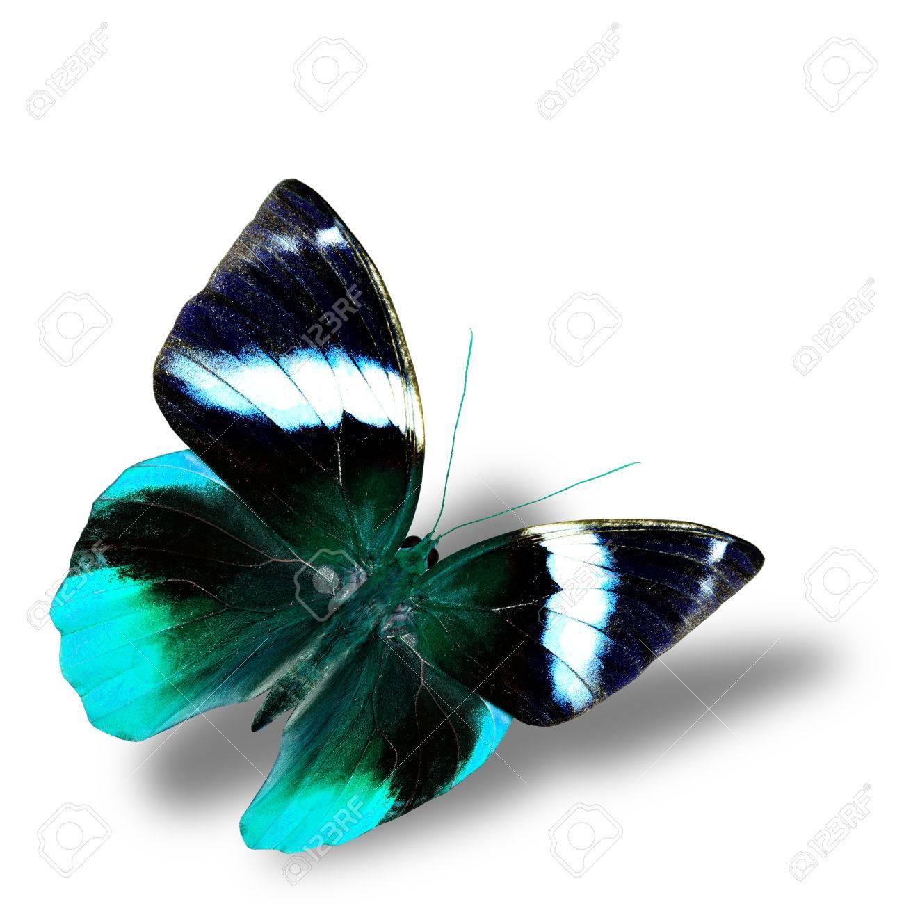 Immagini Stock La Bella Luce Volare Farfalla Blu Con Una Bella