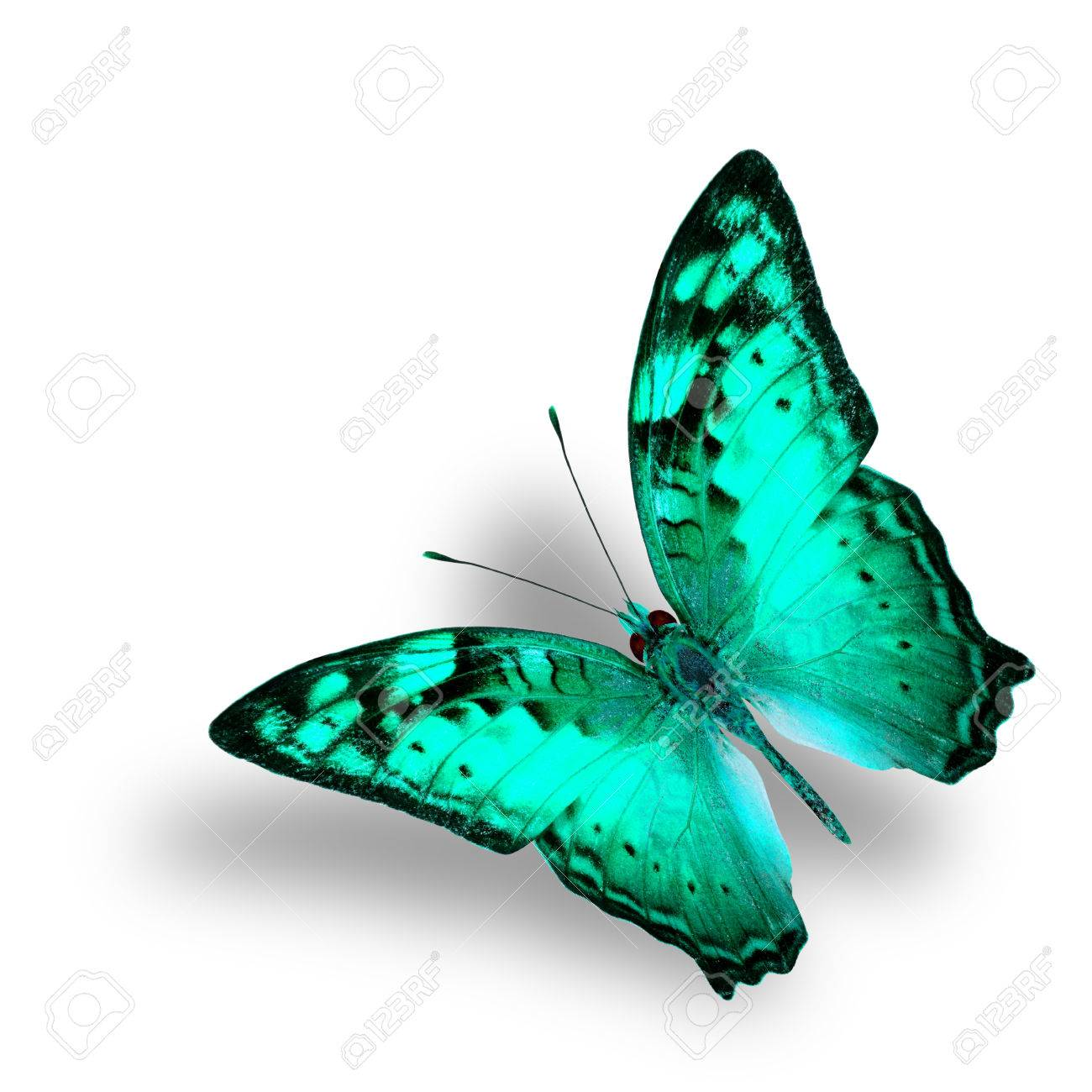 Beautiful Flying Vagrant Butterfly In Fancy Light Green Color Stock Photo Picture And Royalty Free Image Image 44530502