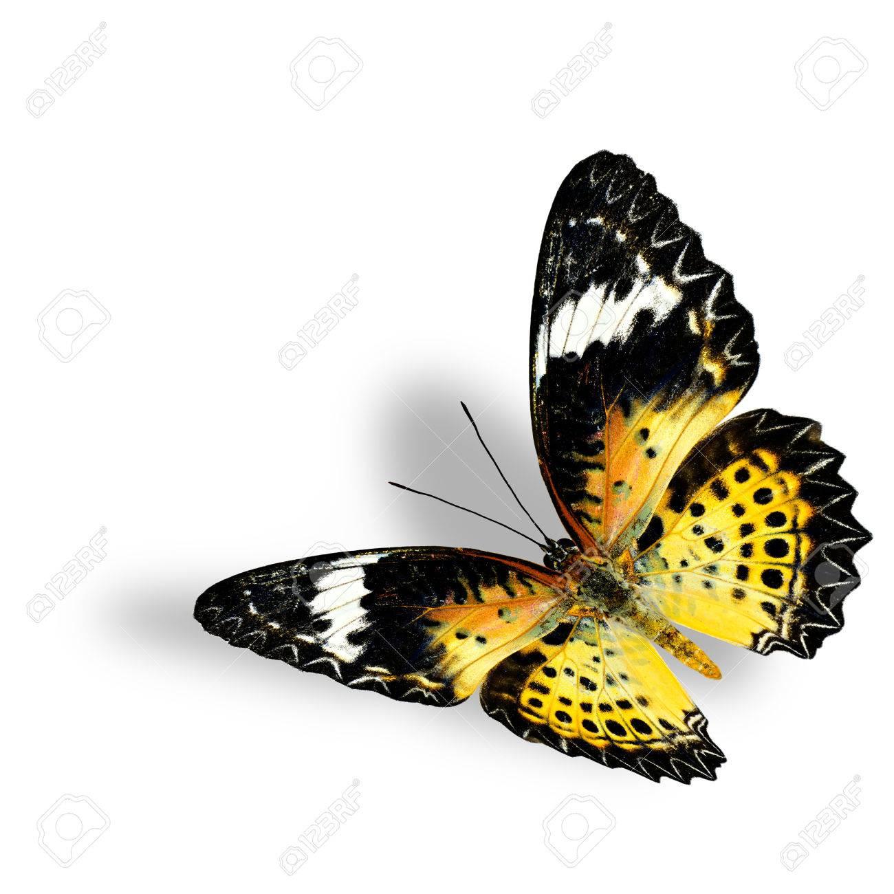Ausgezeichnet Schmetterling Lebenszyklus Färbung Seite ...
