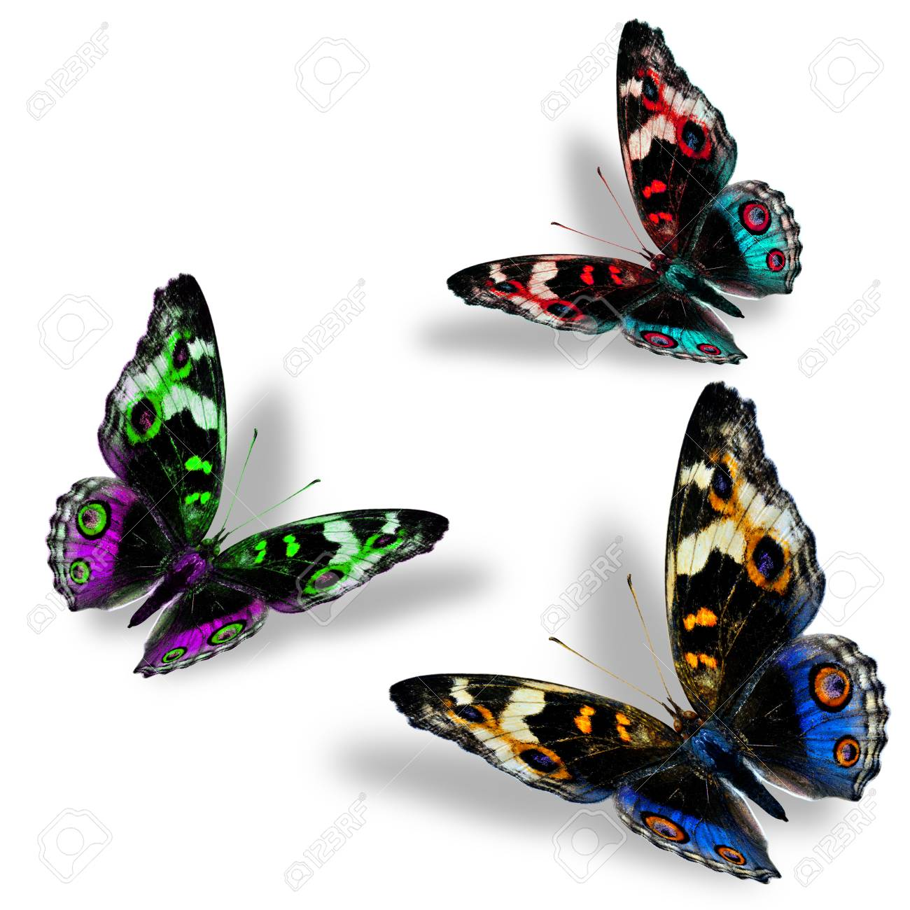 Beautiful Set Of Flying Blue Pansy Butterflies In Fancy Color Stock Photo Picture And Royalty Free Image Image 50249410