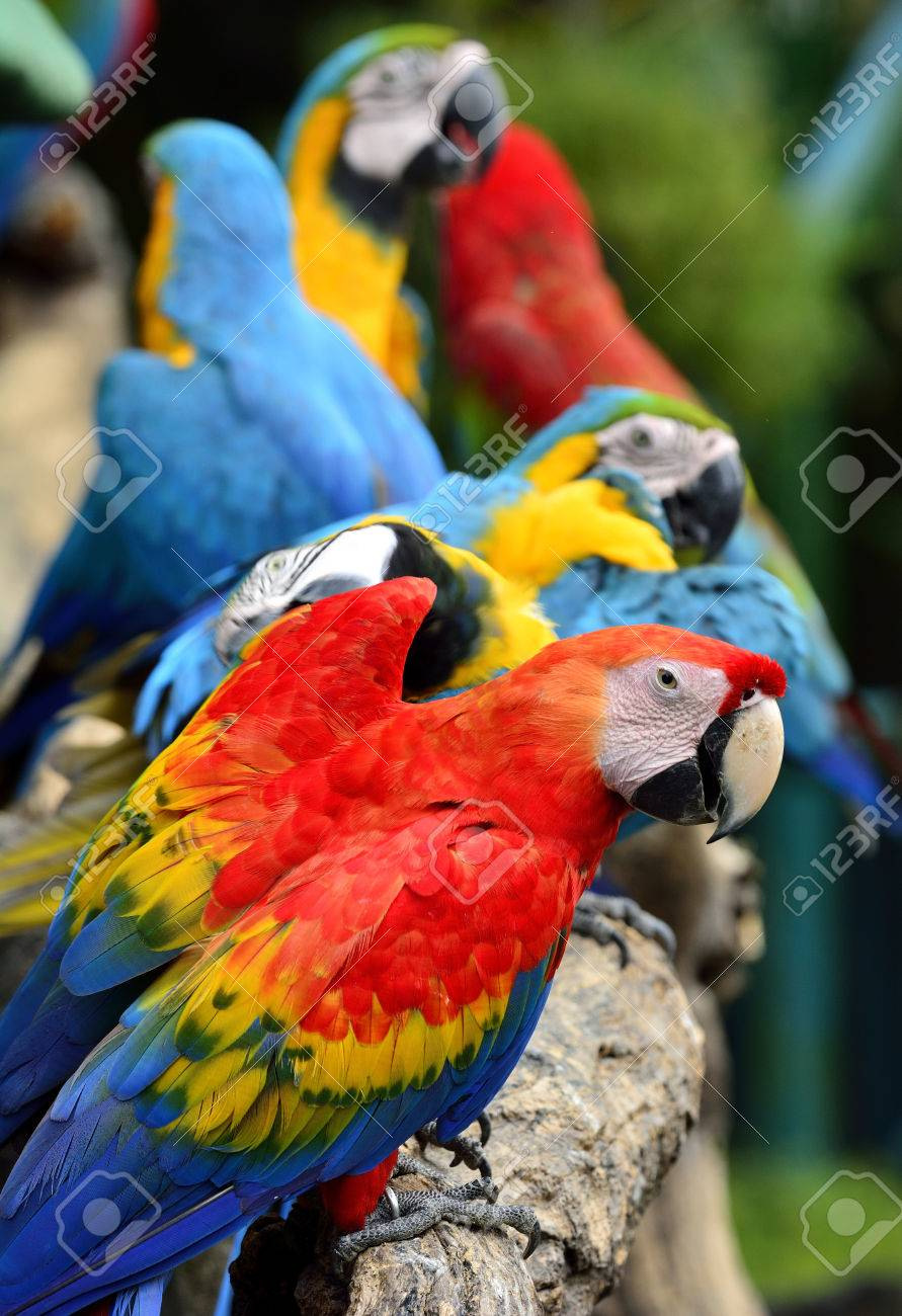 Scarlet macaw parrot bird, beautiful red bird perching on the