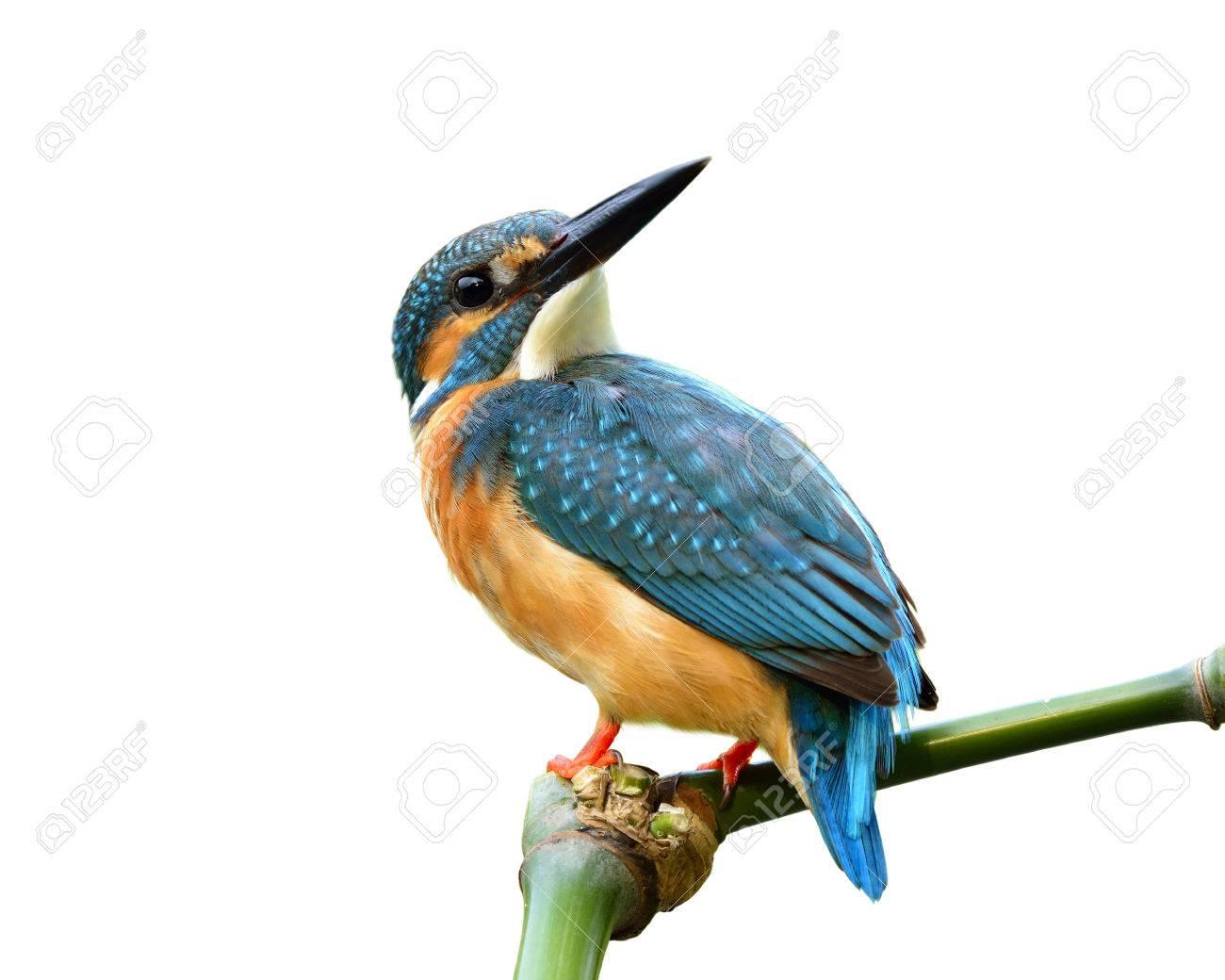 Großzügig Blaue Vogel Färbung Seite Ideen - Entry Level Resume ...