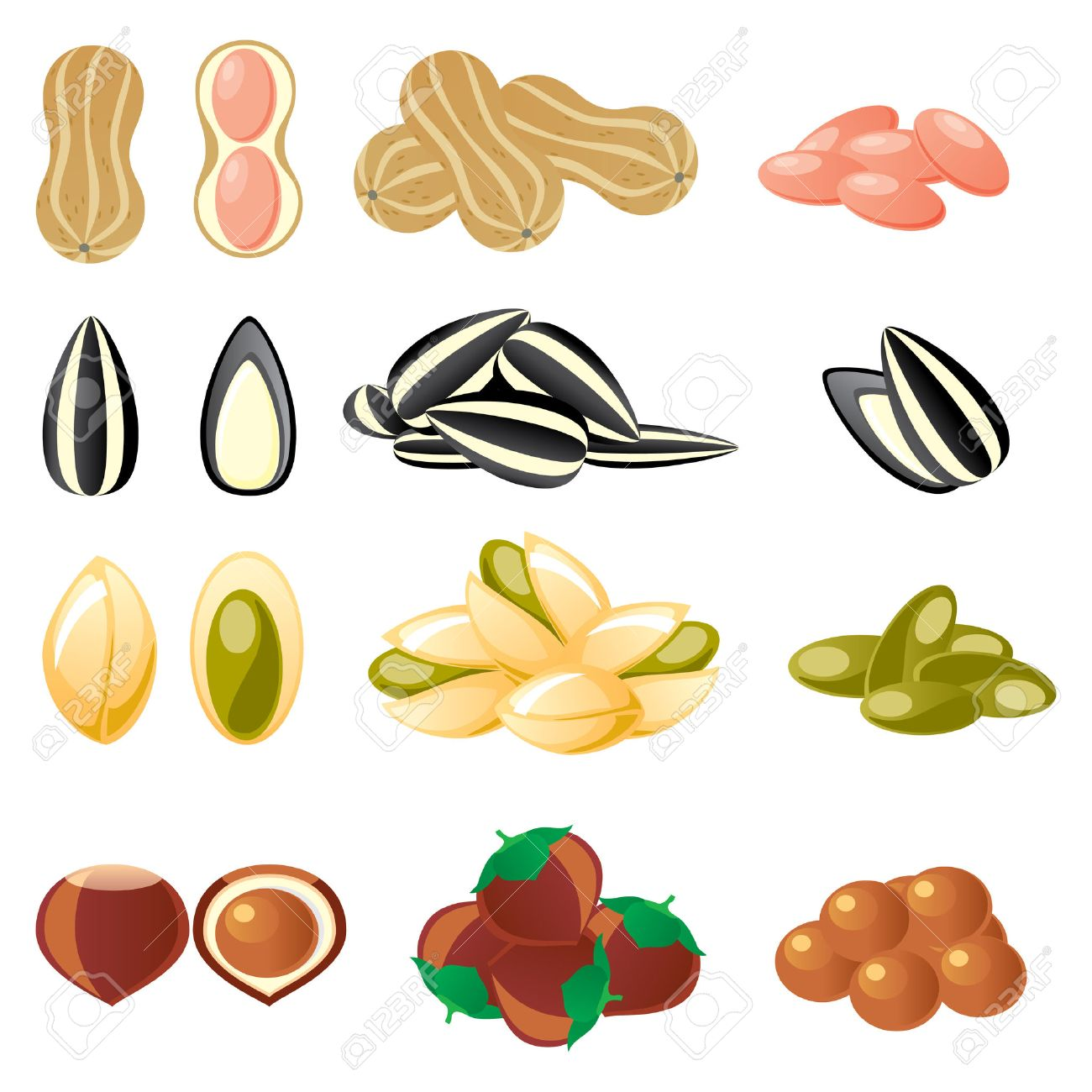 set of  images of nuts and seeds Stock Vector - 7300435