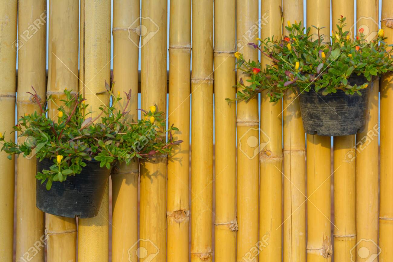 123RF.com & Flower pot holding on bamboo wall background. Garden design and..