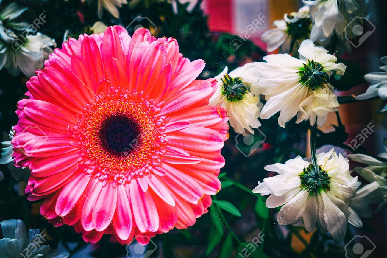 Large Flower Of Pink Gerbera And Small White Chrysanthemum Stock