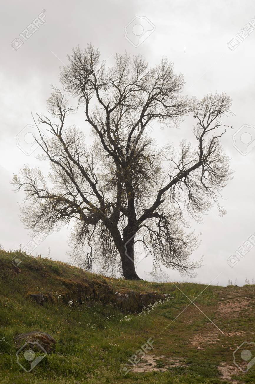A tree in the countryside with sad sky at the background a tree in the countryside with sad sky at the background 96588799 voltagebd Image collections