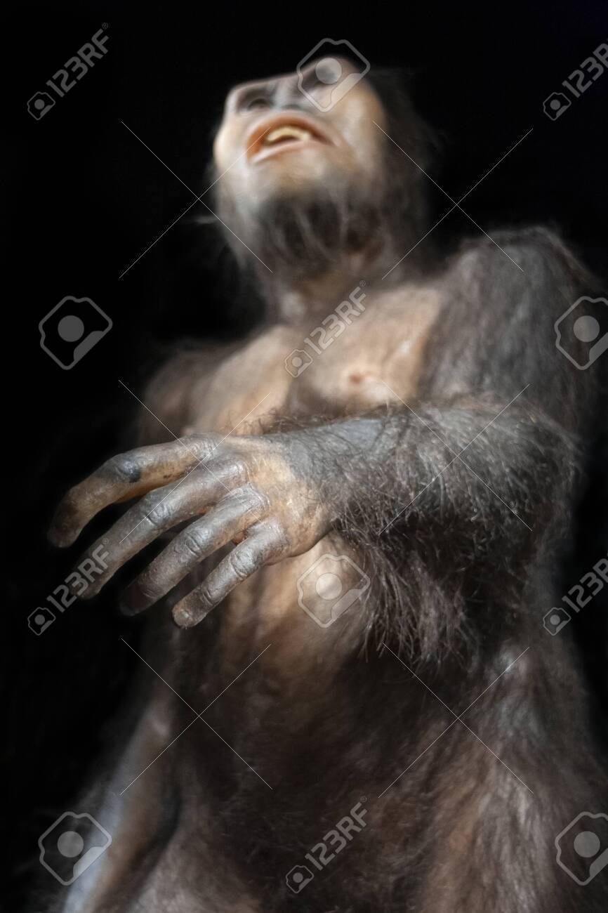 Australopithecus afarensis, an extinct hominid that lived 3 million years ago in africa - 137120555