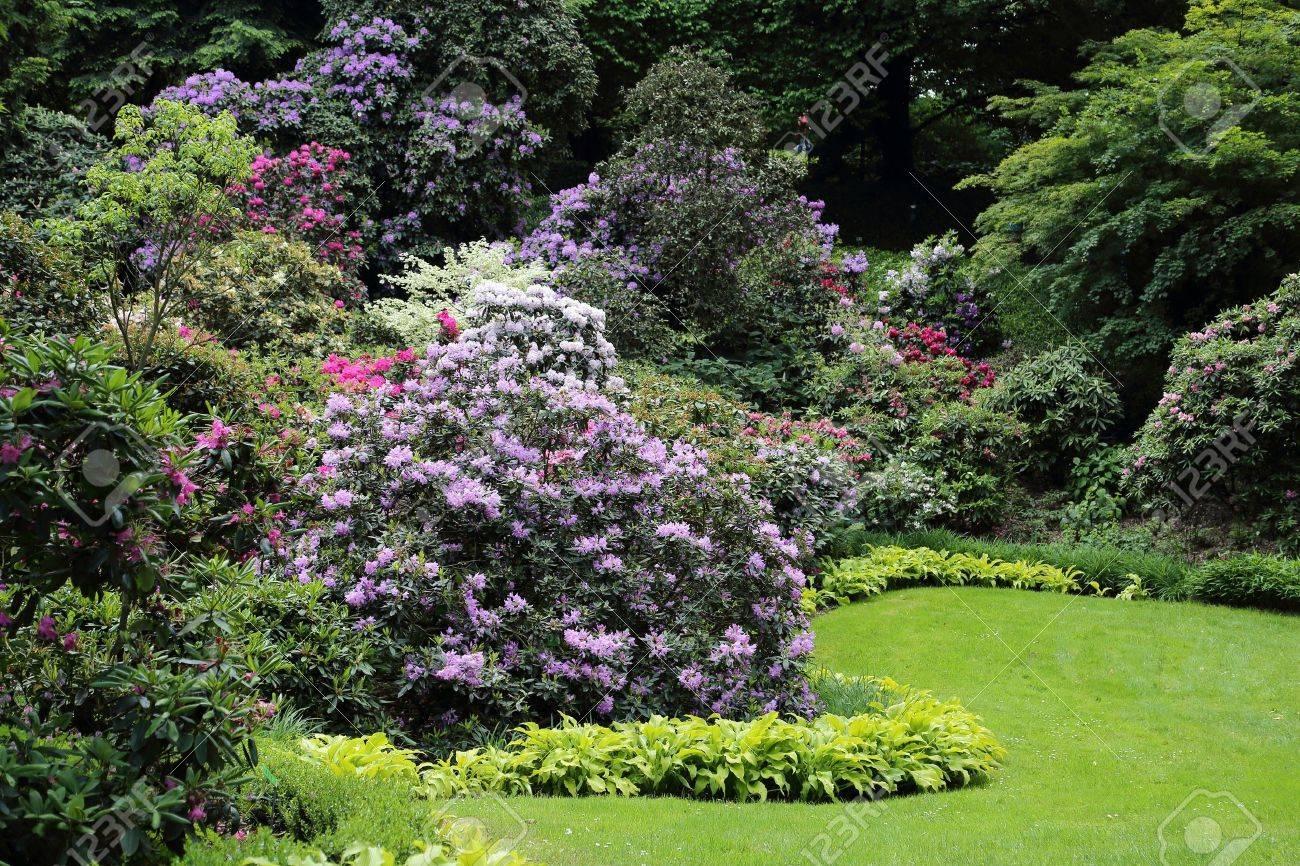 Schöne Rhododendron Blume Sträucher Und Bäume In Einem Garten ...