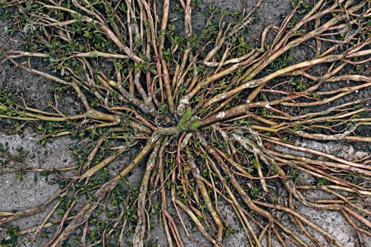 Nature Vascular System Closeup Stock Photo - 15627095
