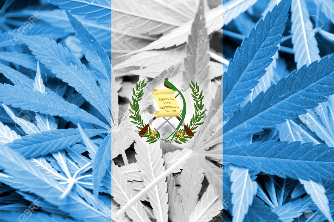 Bandera De Guatemala En El Fondo De Cannabis. La Política De ...